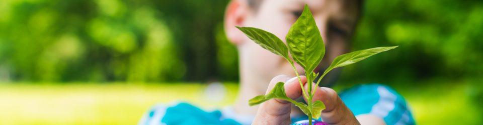 Zum ökologischen Bereich und zu unserer Freiluftklasse